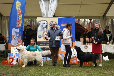 Best in Show was the Golden Retriever, Shamrock As Hot As Hell, bred by Dr Eszter Bárdossy, owned by Renáta Harta; Res BIS was the Portuguese Water Dog, Ambereyes Magic Desperado Cao de Aqua, bred by Beáta Steiner and owned by Dr Eszter Szántó, and Third was the Labrador Retriever, Follow Me To Aldamity Our Pleasure, bred by Jan Murar, owned by Daniela Barotosova (SK).