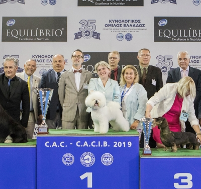 International Show of the Greek KC 11th October Best In Show was the Bichon Frise, TAURO MISOKO, owned by Janita Plunge.