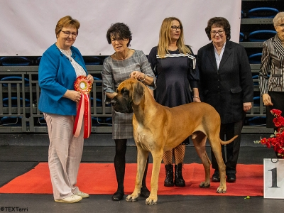 Best in Show at the Tallinn Winter Cup in Estonia was the Great Dane, Euro Power Kid Of Lone, owned and bred by Kati-Maija Korhonen from Finland. Best in Show Judge (left) was Mrs Astrid Lundava (Estonia). Also pictured (right)   are two leading ladies of the organising Club, Margit Siigur and Juta Haranen.