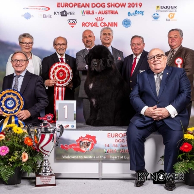 The winner of the European Dog Show 2019 was the Newfoundland, Ursinus Velutus Zesty Guy owned by Zoltan Bartos and handled by Zsolt Hano.