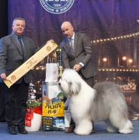 The Res BIS in the Presidents Cup was the OES, Bottom Shaker The Greatest Picture, bred by Szetmár/Koroknai, owned by József Koroknai, handled by Zsolt Hanó. Judge was Andras Korozs.