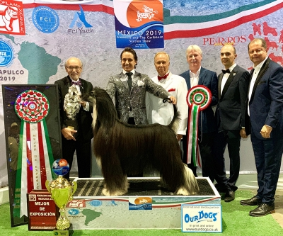 Best In Show was the Afghan Hound, BRILLIANT NIGHT JP DEAR ZEUS (Japan), owned by Juan Miranda Saucedo (Mexico) chosen by the judge Mr. Rafael de  Santiago (Puerto Rico)