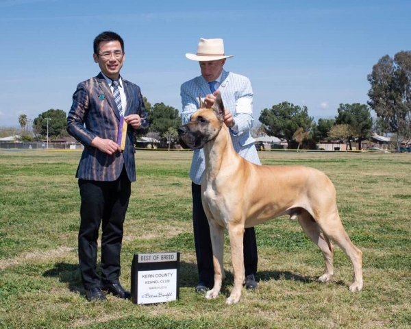 San Luis Obispo Kennel club and Kern Country Kennel club circuit shows.