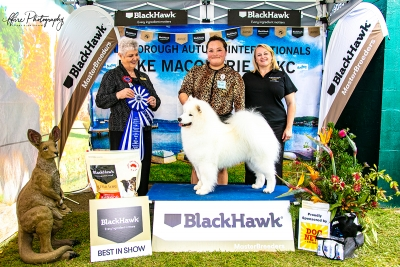 Lake Macquarie All Breeds Kennel Club Best in Show on Friday was judged by Mrs Carol Graham (Canada) who awarded the top spot to the Samoyed AUST SUP CH. AM GCH. SMILING SNOWBALL  LUMINOUS  PANDORA (IMP USA) owned by Ms Y Chen