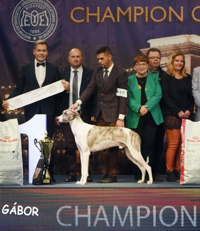 Best in Show at the Hungarian Champion of Champions Show was the Magyar Agar male, Illa-Berek Csutora, bred by Mrs Ferencné Jakkel, owned by Dr Judit Renata Papp and Gabor Olah, presented by Attila Schlosser.