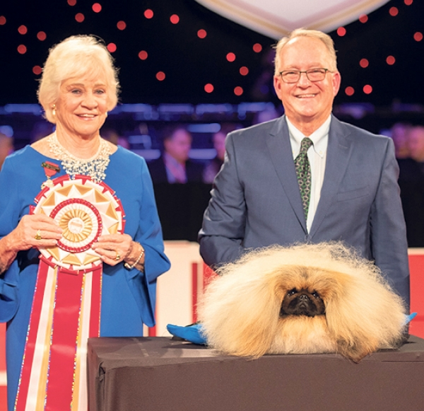 Great win for Wasabi The WINNER of the American Kennel Club Nationals