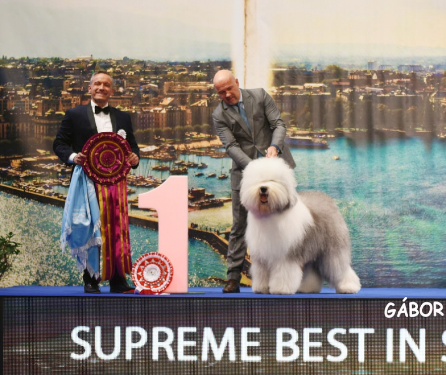 The winner of Super BIS on Sunday at the Geneva International Shows was the OES from Hungary, Bottom Shaker The Greatest Picture, bred and owned by Jozsef Koroknai from Hungary and presented by Zsolt Hanó. BIS Judge was Gerardo A. Paolucci from Argentina.