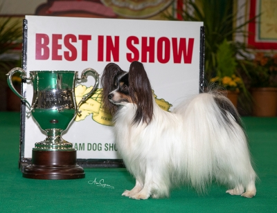 Best in Show was the Papillon, Planet Waves Forever Young Daydream Believers, owned by Miss Kathleen Roosens.