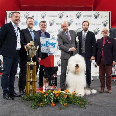 Winner of Group 1, Best In Show Sunday and overall  Supreme Best In Show was awarded to the Old English  Sheepdog RO CH. BOTTOM SHAKER EASY SECRET GIRL.