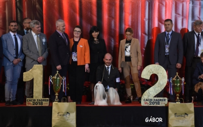 The Saturday BIS and then Sunday's Super BIS was the Lhasa Apso, Amesen All About Me, owned by Paolantoni & Miele from Italy, presented by J. G. Mendikote. The Super BIS Judge was Guy Jeavons (Canada).