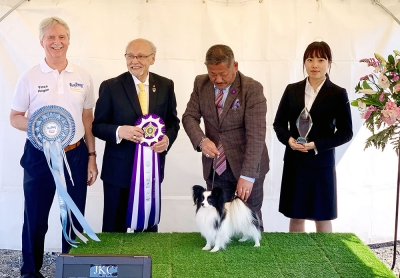 The Best In Show winner at the Kawasaki Dog Club held in Tokyo, Japan was the Papillon Int Ch, Ch. Kiki Of Princess Fantasy JP handled by Masakazu Kamiyama. Pictured with Vince Hogan (MD Our Dogs), Rafael de Santiago (President of the FCI) and a representative from the Japanese Kennel Club presenting the winners Trophy.