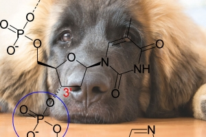 New DNA testing schemes  for the Leonberger