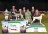 Jill Peak's choice for Best in show at Crufts 2018 was the Whippet, Ch Collooney Tartan Tease JW WW'17 owned by David and Yvette Short and handled by Yvette. Tease was bred by Viv Coulter. Res BIS went to Heather Bennett and Joanne Blackburn-Bennett's Pointer bitch, Sh Ch Kanix Chilli, handled by Joanne. They are seen here with KC Chairman, Simon Luxmoore  (centre) and Gerald King, Chairman of the Crufts committee. Pictured far left is Matthias Schiller, Managing Director (Europe) of Spectrum Brands (Eukanuba)