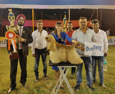 At the 52nd Championship Pointed Show the Best In Show Winner under judge Ranjeet Singh Munjal (IND), was the American Cocker Spaniel Multi BIS Ind GR Ch Helada Hill's Absolute, owned By Pallab Saha.