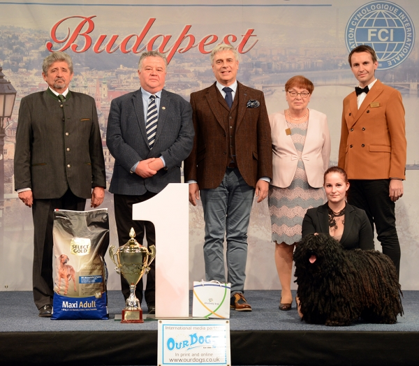 The Super BIS of the Winterdogshow weekend was the black Puli, Pörgelóci Bodrog, bred by Dorottya Crkvenjakov, owned byVivien Benedek with the five BIS Judges, Sandor Szabo, Andras Korozs, Dr Tamas Jakkel, Dr Zsuzsanna Balogh and Ivor Vyguzov (Russia).