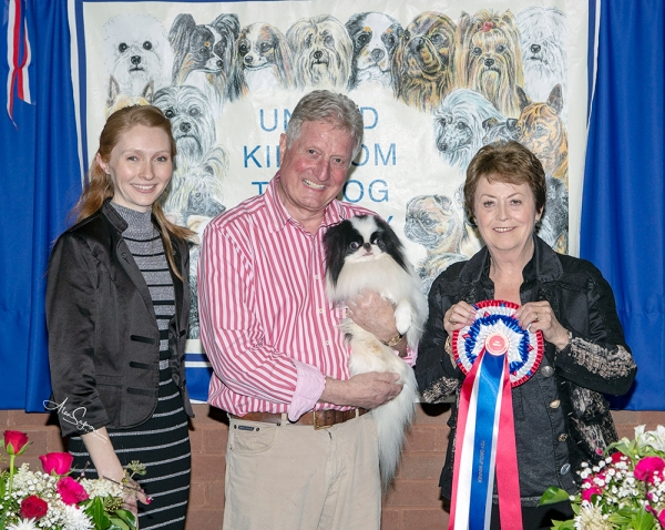 Best in Show was the Japanese Chin, Ch Littletigers Damage Case at Sleepyhollow (Imp) It JW, owned by Tony  Allcock MBE, pictured with Helen Rishworth (Assistant Show Manger) & best in show judge Jill Peak.