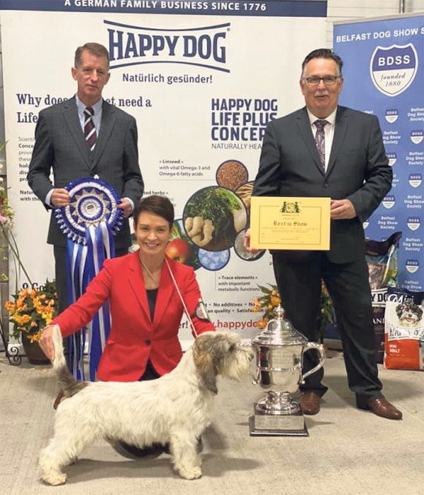 Best in Show at belfast last weekend, and three years  after his first BIS there, was Sara Robertson and Wendy Doherty's PBGV Ch Soletrader Magic Mike. Sara and Mike are pictured here with BIS judge John Thirlwell and Secretary Jackie Stubbs    More on pages  4-5 in OD2