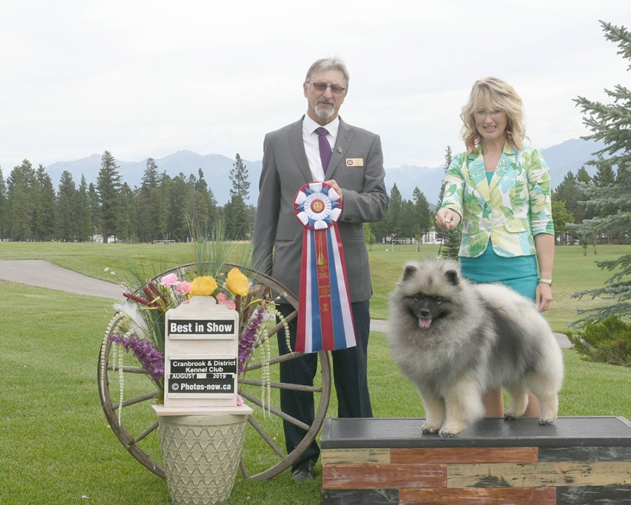 Judge Mel Saranchuk awarding Best in Show to the Keeshond, Ch Ashbrook's Maverick From Shainakees, owned by Lynne Hewitt & Ruthann Seibert, handled by Connie Krohn.