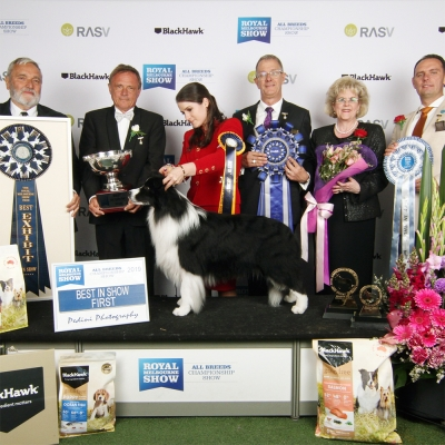 Royal Melbourne Show 2019 Best in Show was the Border Collie, the Kezziah Kennel's Sup Ch Pukawidgee Name Of The Wind. BIS Judge was Espen Enge (Norway).