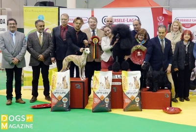 19th Santarem International Dog Show 2018 BIS Star Sapphire Ali Baba And The Forty Thieves Poodle Daniela Oliveira Duarte