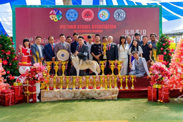 BEST IN SHOW at the Vietnam Kennel  Association 10th  Anniversary Ch Show was the Siberian Husky CH KRISTARI'S ROCK N ROLL AT DESMAR. Bred by Sharon Osharow, owned by Kelvin Nguyen  Duc Anh, Nguyen Haoang Duong.